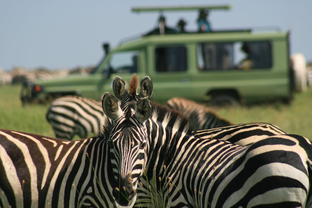 8 Day SERENGETI CURCUIT - See the best of the Serengeti circuit in mobile tented camps!
