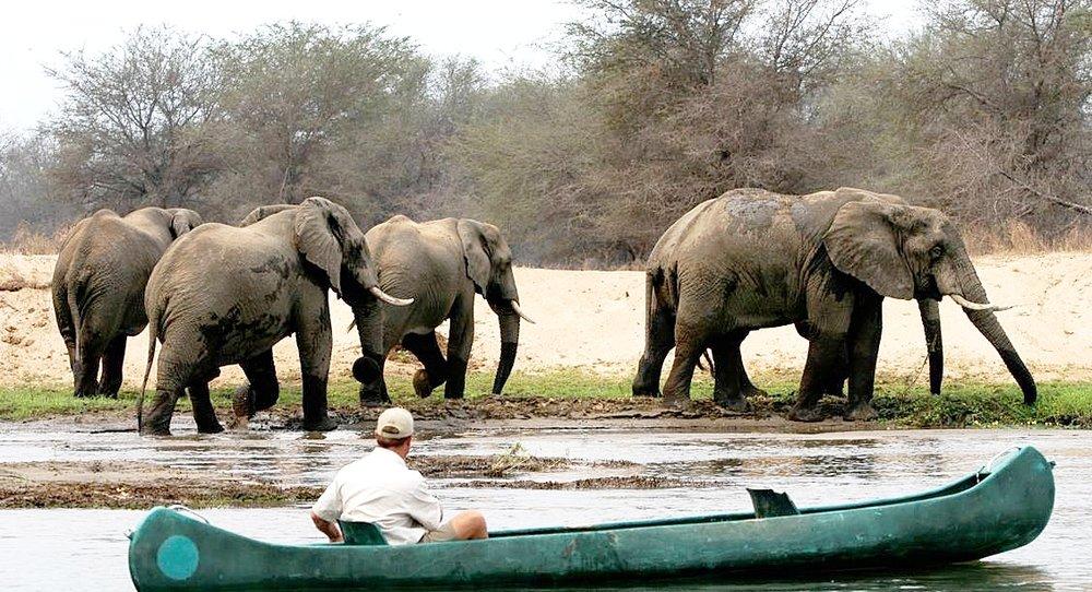 Africa Botswana Safari
