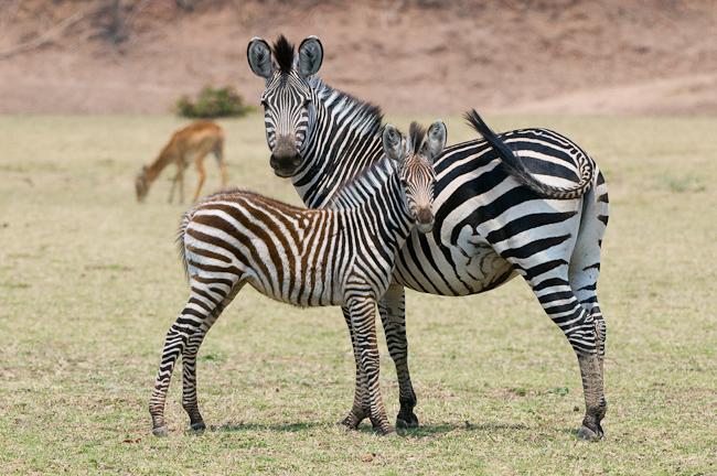 africa_photo_safari-africa_photo_safari