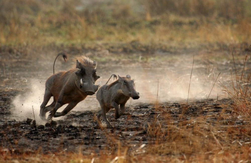 afriafrica_photo_safari-africa_photo_safari