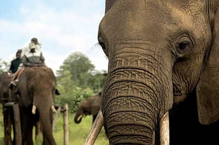 Africa_photographic_safari-Elephant_interaction