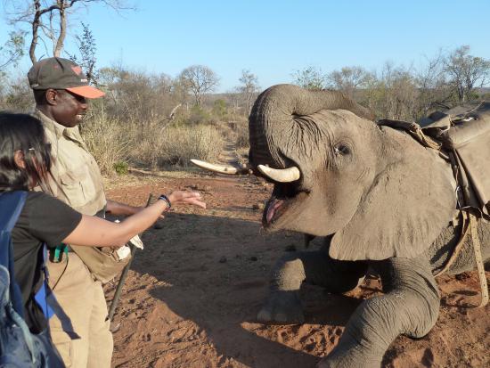 Africa_photographic_safari-Elephant_interaction