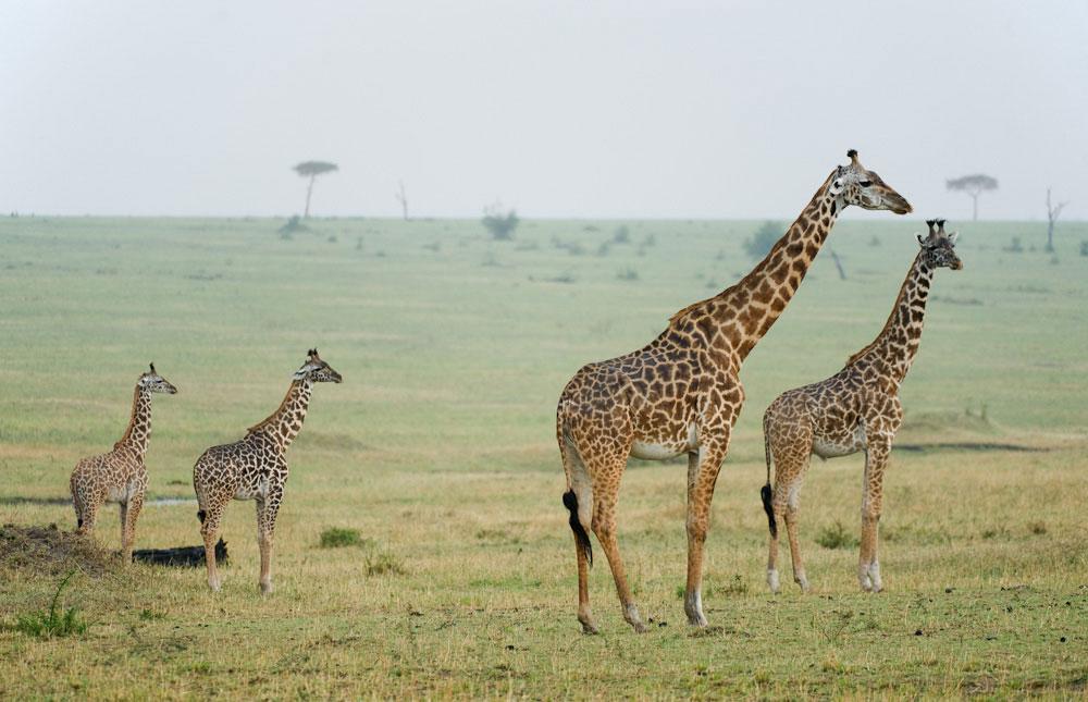 africa_photographic_safari-tanzania-tarangire