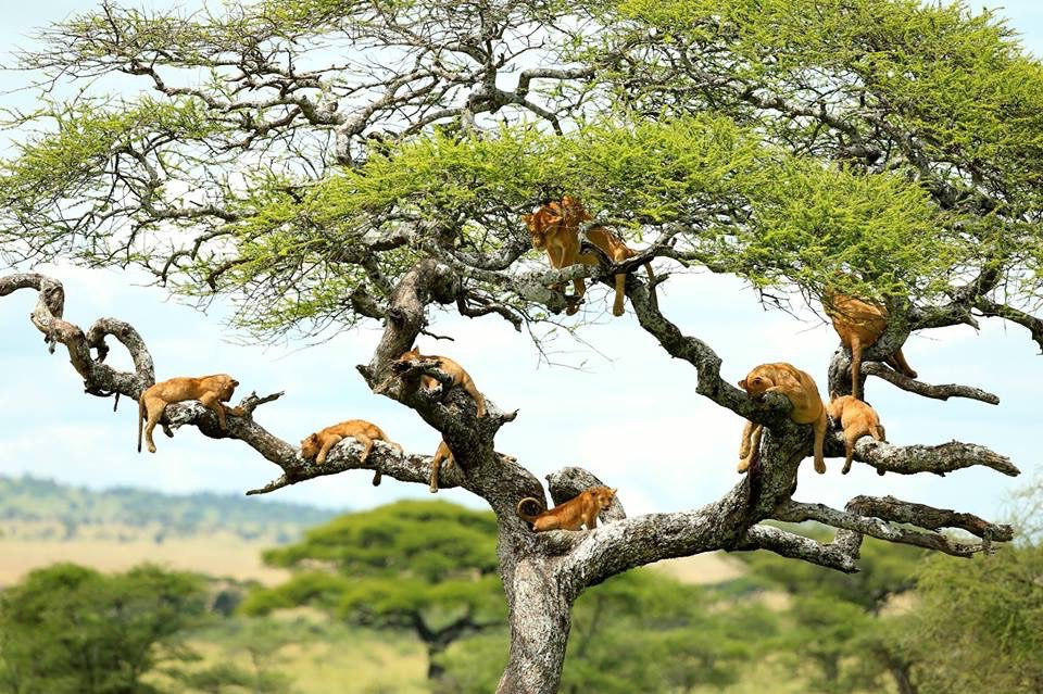 africa_photographic_safari-tanzania-LakeManyana