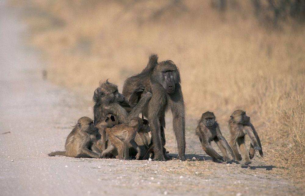 Africa_photographic_safari-Zimbabwe