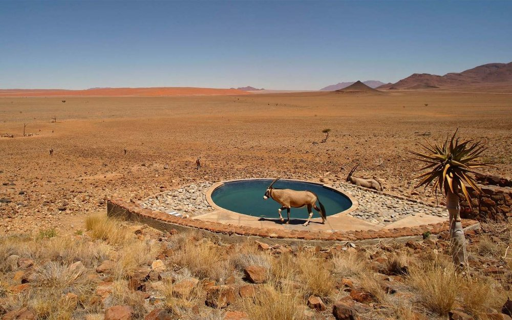 africa_photo_safari-africa_photo_safari-namibia