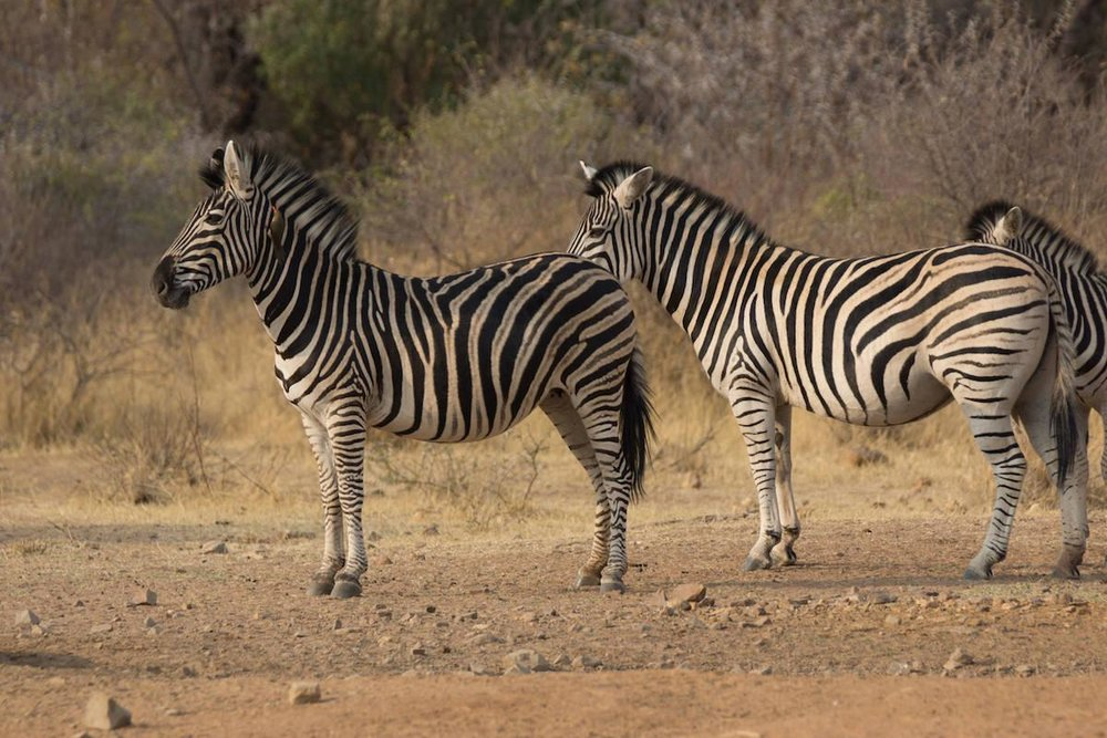 africa_photographic_safari_South_Afrifca