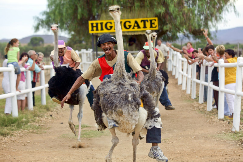 africa_photo_safari_South_Afrifca_Outshoorn
