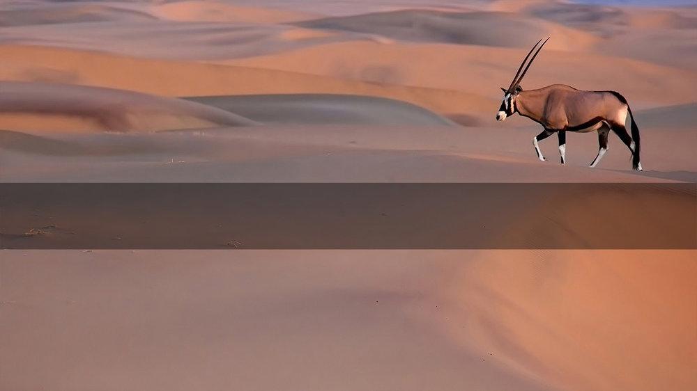 Safari in Namibia       NAMIBIA's    Great Dunes      MORE INFO