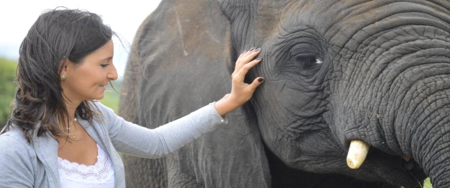 arica-photo-safari-elephants8.png