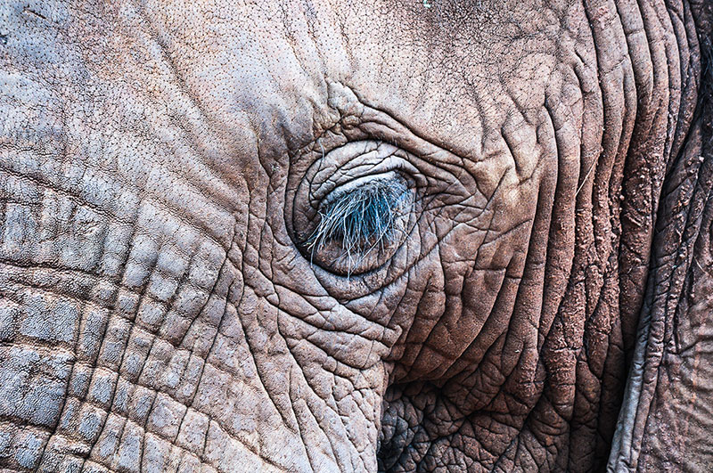 arica-photo-safari-elephants6.jpg