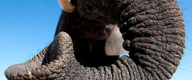 arica-photo-safari-elephants5.jpg