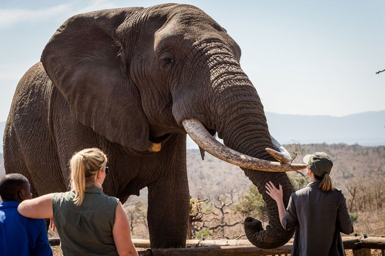 arica-photo-safari-elephants4.jpg