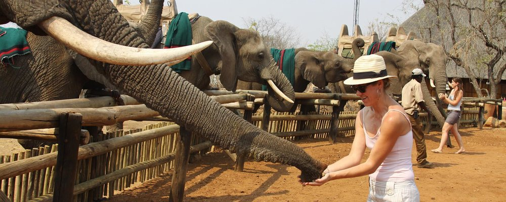 arica-photo-safari-elephants3.jpg