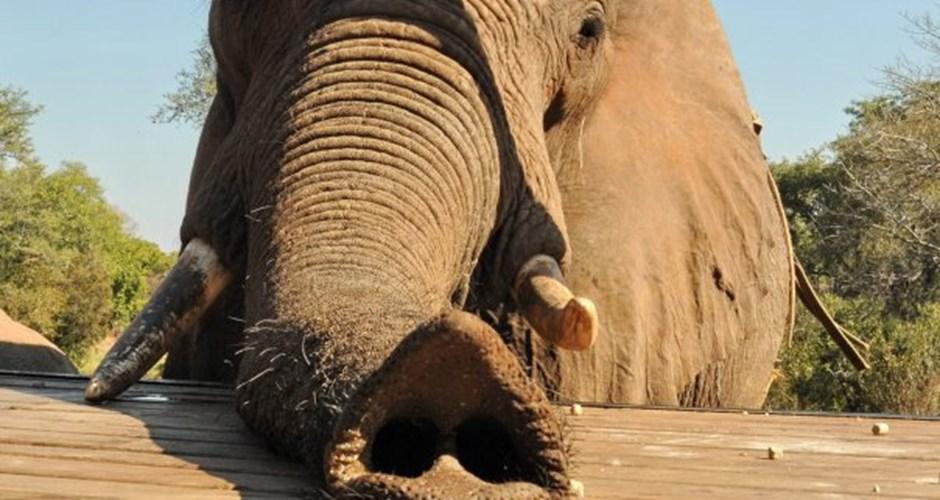 arica-photo-safari-elephants2.jpg