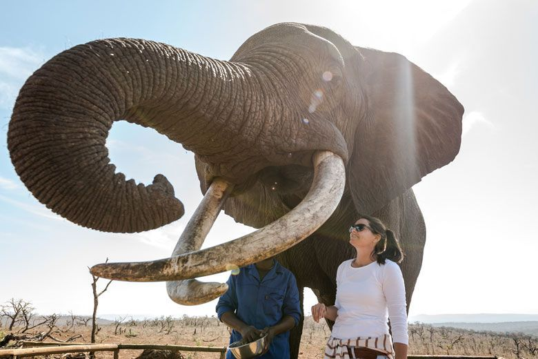 arica-photo-safari-elephants1.jpg