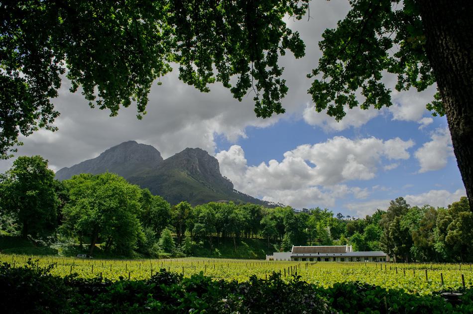 africa-picture-safari-winelands7.jpg