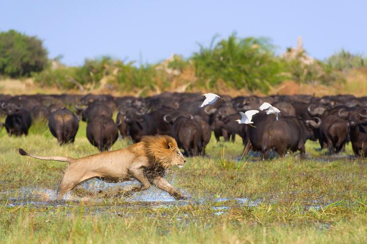 Africa_safari_okavango delta2.jpg