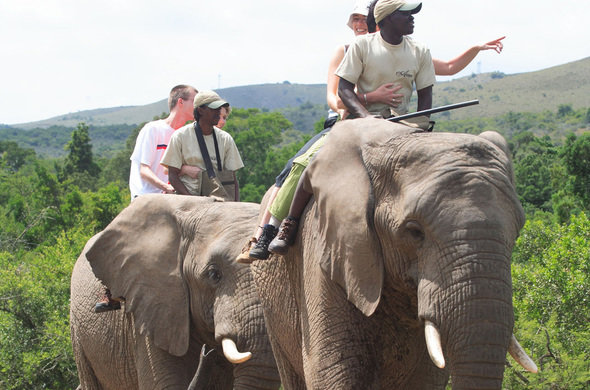africa-photo-safari_ elephant interaction10.jpg