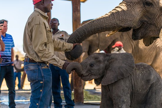 africa-photo-safari_ elephant interaction.jpg