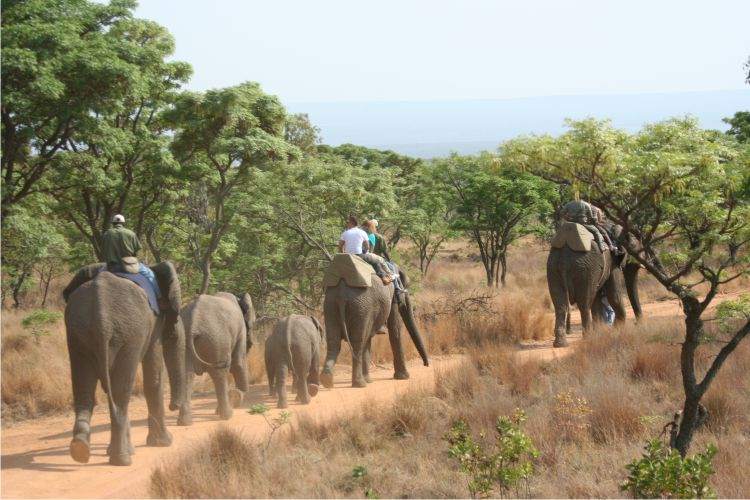 africa-photo-safar1_ elephant interaction8.jpg