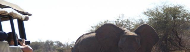 Elephants River Photo Camp4.jpg
