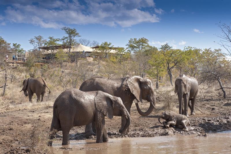 Africa Photo Safari hotel Elephants15.jpg