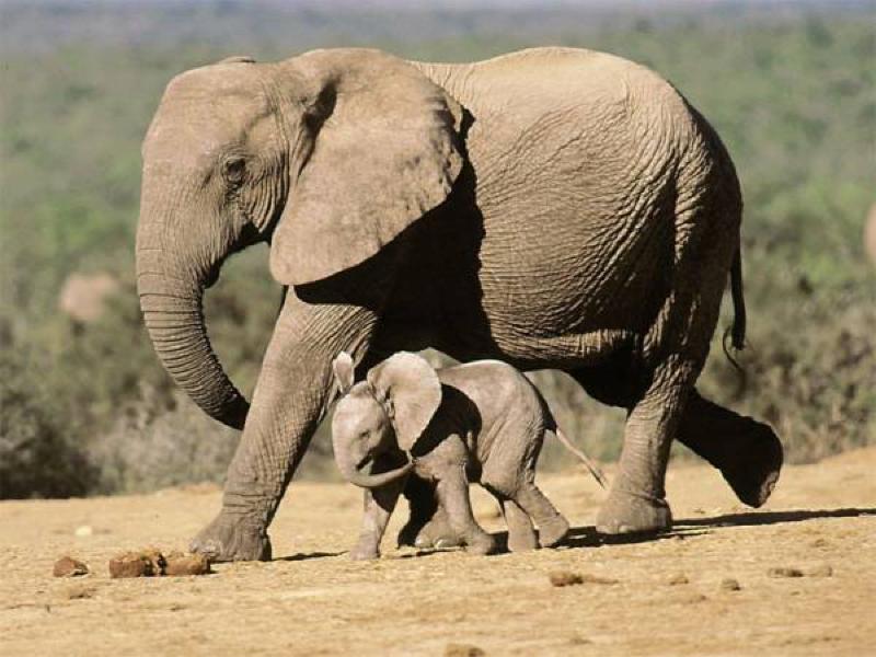 Africa Photo Safari hotel Elephants11.jpg
