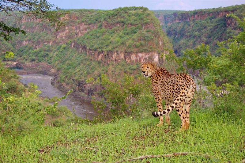 Africa Photo Safari hotel Elephants3.jpg