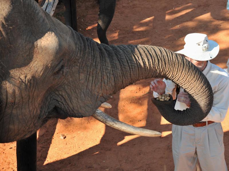 Africa Photo Safari hotel Elephants2.JPG
