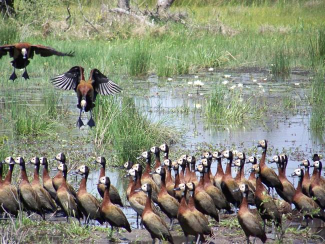 africa photo  moremi1a.jpg