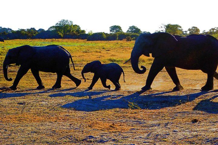 africa photo  moremi3.jpg
