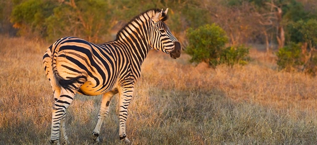 africa photo safari south Africa20020.jpg