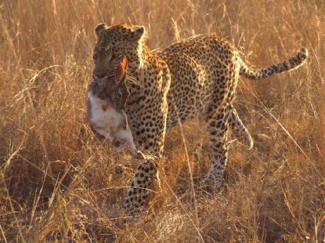 africa photo safari south Africa20019.jpg
