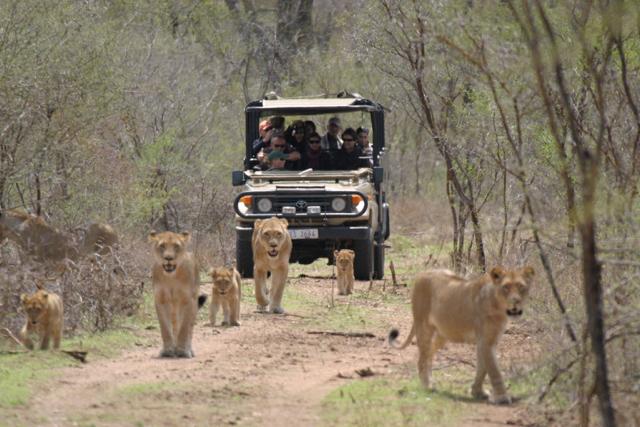 africa photo safari Kruger park34.jpeg