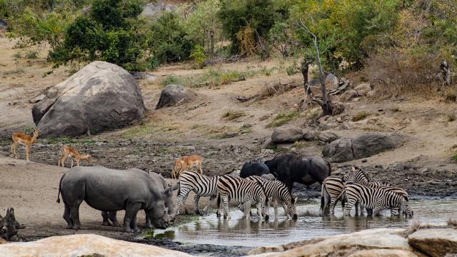 africa photo safari Kruger park29.jpeg
