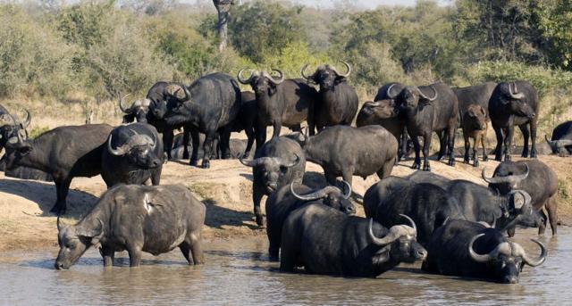africa photo safari Kruger park27.jpeg