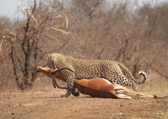 africa photo safari Kruger park22.jpeg