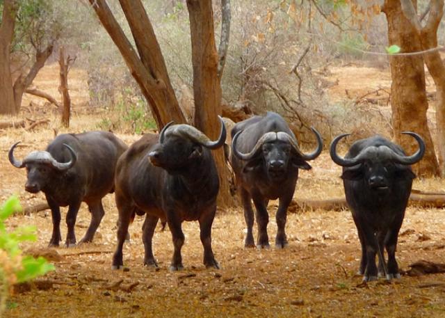 africa photo safari Kruger park17.jpeg