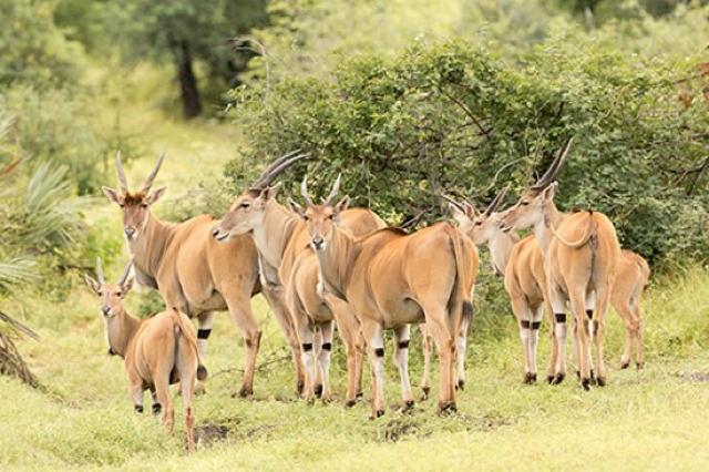 africa photo safari Kruger park14.jpeg