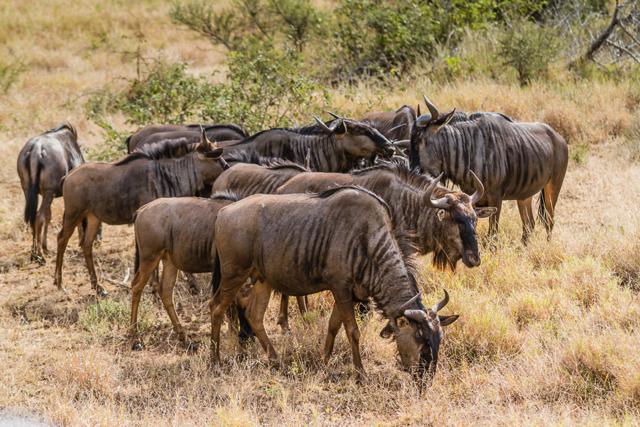 africa photo safari Kruger park10.jpeg