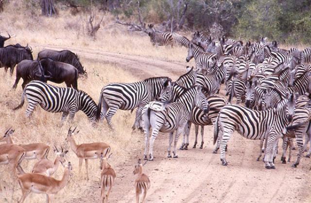 africa photo safari Kruger park8.jpeg