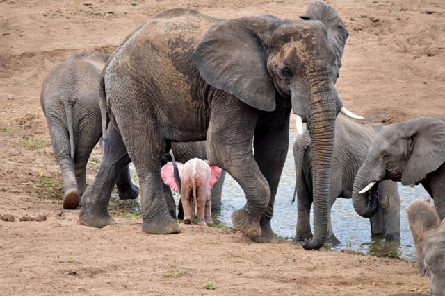 africa photo safari Kruger park7.jpeg
