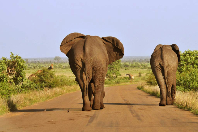 africa photo safari Kruger park5.jpg