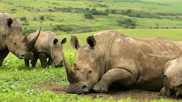 africa photo safari Kruger park30.jpeg