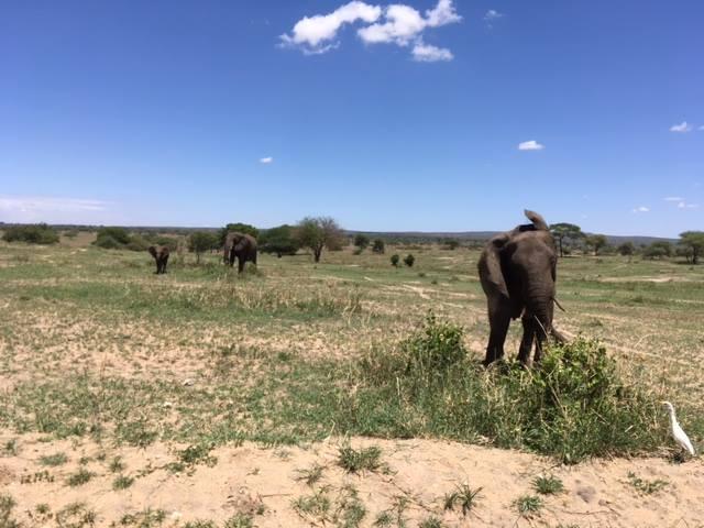 africa photo safari-tanzania116.jpg