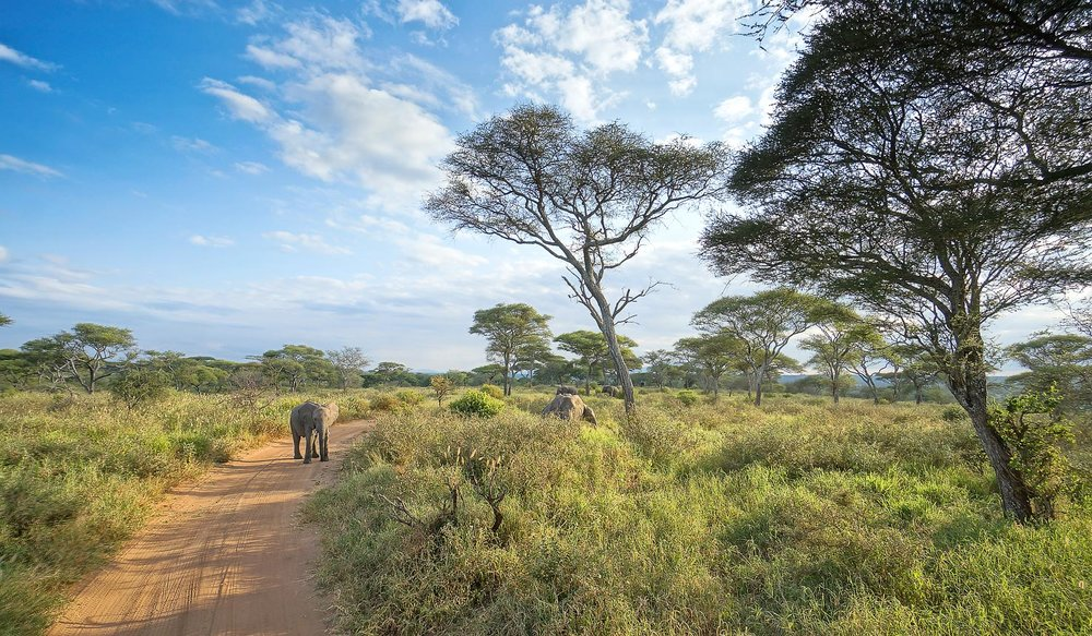 africa photo safari-tanzania113.jpg