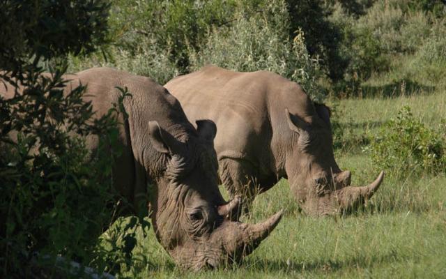 africa photo safari Madikwe15.jpg