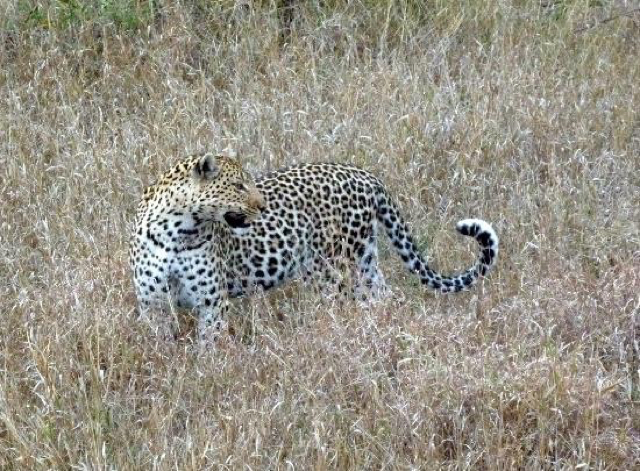 africa photo safari Madikwe13.jpg