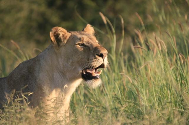 africa photo safari Madikwe12.jpg